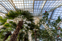 2016 3 Schonbrunn palm house 0063