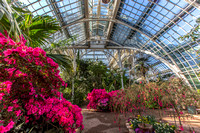 2016 3 Schonbrunn palm house 0473